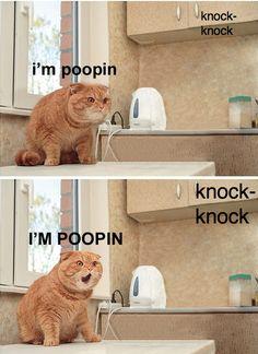 Knock Knock, Pooping Cat