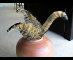 I love cat gifs and dog gifs. Funny Cats, Cute Cats, all the time.Big animals gif lover too. Funny Cat Compilation, Funny Cat Videos, Funny Cats, Funny Animals, Cute Animals, Big Shot, Fat Cats, Cats And Kittens, Crazy Cat Lady