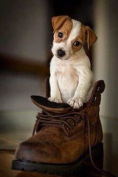 """""""No, dear Sadie, I don't think you ever fit in a shoe. On the good side you never chewed them either."""""""
