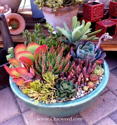 We'll demonstrate how to work with scale, color, shape and texture to create succulent arrangements that WOW! Description from chicweed.wordpress.com. I searched for this on bing.com/images