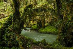 Queulat National Park  by jpurresti, via Flickr