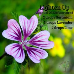 Lighten Up the atmosphere in any room with this summery diffuser blend! This one is perfect made into a roll on also! Essential Oil Diffuser Blends, Essential Oils, Homeopathic Medicine, Diffusers, Geraniums, Young Living, Home Remedies, Aromatherapy, Lavender