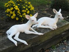 Albino Twin Deer - they don't know their spots are gone, so they act like all the other deer, nobody cares.
