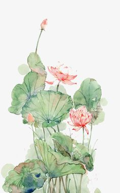 Watercolor lotus PNG and Clipart Watercolor Lotus, Lotus Painting, Watercolor Flowers, Watercolor Paintings, Lotus Flower Art, Lotus Art, Lotus Drawing, Japanese Art Modern, China Art