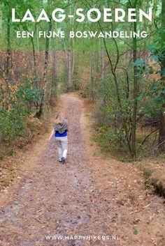 Door de mooie bossen bij Laag-Soeren hebben we een geweldige wandeling gemaakt. Over onverharde paden waanden we ons alleen in het bos. Walkabout, Holidays With Kids, Day Trip, Netherlands, Paths, Places To Go, Hiking, Country Roads, Adventure