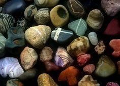 Rocks and shells