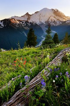 Rainier in the Cascade Mountains of Washington/ I've been to the very top/vistas and moments of a lifetime Oh The Places You'll Go, Places To Travel, Places To Visit, Travel Destinations, Beautiful World, Beautiful Places, Beau Site, Cascade Mountains, Rocky Mountains