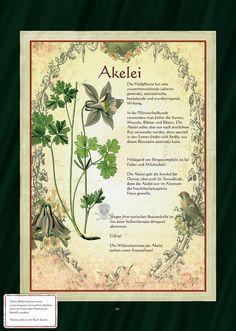 Akelei - Akeleitee