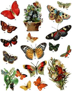 butterflies full page 1 by Emma Paperclip, via Flickr