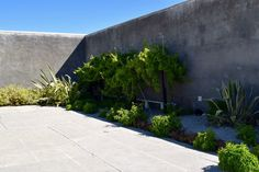 Robben Island - Nelson Mandela's garden where he hid his manuscript