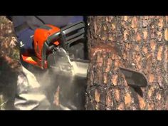 How To Cut Down A Tree With A Chainsaw • Ready Tribe