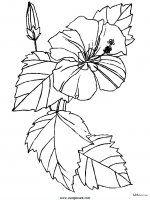 disegni_da_colorare_natura/fiore_fiori/fiori_59.JPG