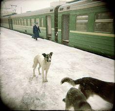 Platform Dogs I. Moskau 2004  |  © Andrea Hoyer