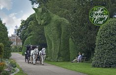 https://flic.kr/p/L3dnYC | The Topiary Cat at Hatfield House | The Topiary Cat tries not to draw attention to himself, so he keeps ever so still. However here he has obviously become fascinated by the magnificent horse-drawn coach that transports visitors around this historic estate. www.thetopiarycat.co.uk