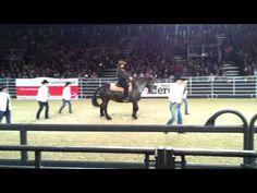 Line Dancing Horse