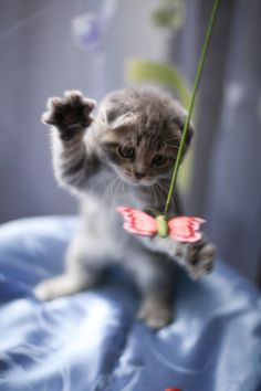 Playful kitty :)