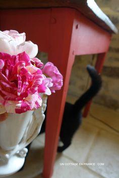 Rose Brocéliande, Blog maison et jardin 6
