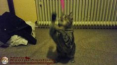 Kaninchenfan Lucky - Mein Kaninchenloch: Some morning activities for Schnucki and also for me (^_^)   #cats #katzen #neko #pets #haustiere   kaninchenfanlucky-meinkaninchenloch.blogspot.de/2015/01/some-morning-activities-for-schnucki.html