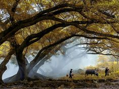 Picture of people walking through the mist under a tree, China