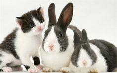 Download imagens coelhos e gatinho, amizade, gato, coelho, animais de estimação