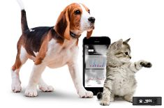 Tractive Motion tracks your pet's daily activity. Motion provides insight into your pet's active moments — lazy moments — and even aquatic moments with its completely waterproof build Timberland, Dog Gadgets, 21st Gifts, Cool Pets, Cats And Kittens, Kitty Cats, Animal Pictures, Best Dogs, Fur Babies