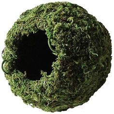Long-Lasting - Holds up to humidity & UV light Ideal for forest and woodland reptiles & amphibians Add on top to create a dark mossy cave! Available in & sizes, Green & Sphagnum Moss Madagascar Hissing Cockroach, Gecko Cage, Gecko Habitat, Frog Habitat, Snake Enclosure, Gecko Terrarium, Terrariums, Bearded Dragon Habitat, Reptile Supplies