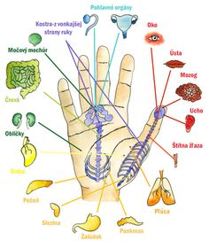 Reflexology Points, Hand Reflexology, Acupressure Points, Alternative Health, Alternative Medicine, Human Body Facts, Natural Teething Remedies, Health And Fitness Articles, Massage Therapy