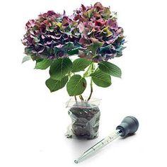 Step 1 - Create a Stunning Fall Hydrangea Arrangement - Southern Living Hydrangea Potted, Hydrangea Arrangements, Flower Arrangements Simple, Fall Arrangements, Bird Nest Fern, Begonia, Muted Colors, Container Gardening, Bouquet