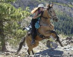 Great picture of a Paso Fino on the trail.