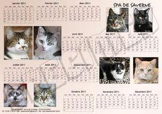 Chat Web, Cat Calendar, Fiction, Cats, Animals, Calendar, Gatos, Animales, Animaux