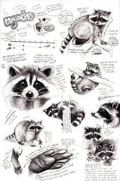 Artistic raccoon study focusing on its visual appearance and eating habits.