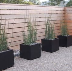 Keeping it minimal with architectural planting  for a contemporary outside space . . .