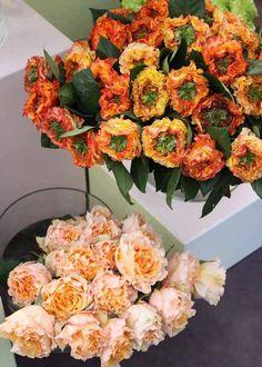 El Fuego and Peach Campanella Roses