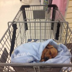 The only way to shop with your sleeping dachshund