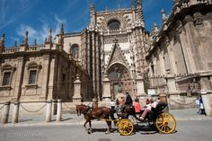 In front of the cathedral in Seville, Spain. Beautiful city, colorful, full of history, great food. We were ther during holy week in 2010, and got to see many processions. My travbuddy blog has more.