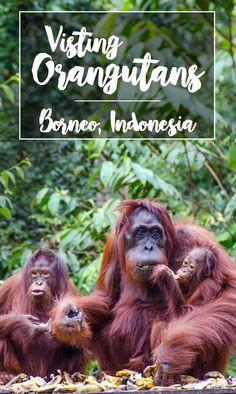 Borneo Orangutan Tour in Tanjung Puting National Park