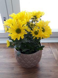 yellow flowers, soft pink pot