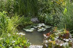 Dense planting around a pond creates a luscious look. Lily pads and grasses around a pond.