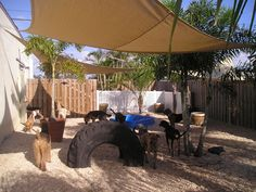 Cool play yard set up for dogs