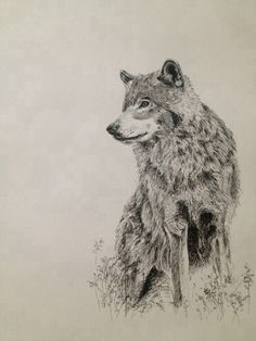 Wolf ink drawing   Mary-Ann Cummings