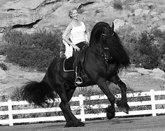 What a mover.  Willingness to learn, obedient & look at all that hair....the horse of course.