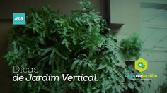 Dicas de jardim vertical #19