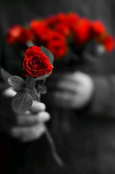 "love-roses-are-red: "" A little rose for you my friend ♥ """