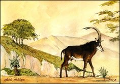 "African antelopes Sable antelope big game shot safari Africa 11x8"" 29x21 cm art original Watercolor painting by Juan bosco"
