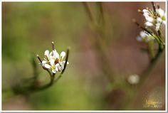 beautiful Spring photos from Jill Samter photography