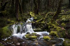 It can't be because of this creek running through a rainforest like silk.   29 Reasons Tasmania Couldn't Possibly Be A Must-See Destination