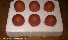 6 French Copper Maran hatching eggs (Auction ID: 935, End Time : 12 Feb. 2013 19:52:45) - Chicken Or The Egg