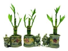 Details about Plant 3 Sets Lucky Bamboo Arrangements in 3 Different Shapes Vase with Elephant Plant Christmas Gifts For Coworkers, Best Christmas Gifts, Christmas 2014, Feng Shui, Cool Things To Make, Spice Things Up, Elephant Plant, Elephant Trunk, Lucky Bamboo Plants