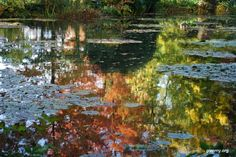 Giverny, Monet's garden where many of his paintings were inspired, including Water Lilies (my favorites!)