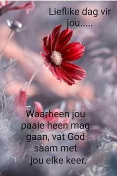 Good Morning Messages, Good Morning Wishes, Good Morning Quotes, Lekker Dag, Afrikaanse Quotes, Goeie More, Sweet Love Quotes, Morning Blessings, Special Quotes